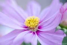 #Lensbaby #Sweet35 #Macro #Flower