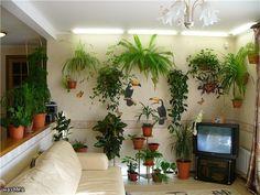 Тенелюбивые комнатные растения - Растения цветущие для офиса и дома – рекомендации по уходу за ними даем вам - Форум-Град