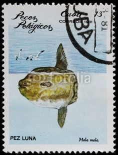post stamp shows pelagian fish mola mola