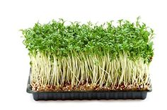 Premier Seeds Direct ORG130B 200g Cress Organic Sprouting... https://www.amazon.co.uk/dp/B00CSR8QXG/ref=cm_sw_r_pi_dp_x_PCB6zbDNCHXJR