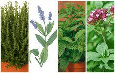 Bylinky sa v minulosti používali ako alternatívna medicína na liečenie chorôb a dokonca aj dnes lekári stále odporúčajú niektoré bylinky ako podpornú liečbu, pretože prispievajú k zlepšeniu zdravotného stavu.