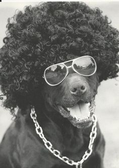 FUNNY DOG POSTCARD - MUST SEE!