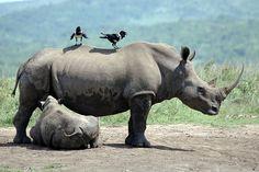 Rhino Hluhluwe-Imfolozi game reserve