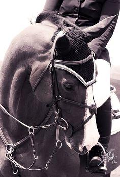 """Horses """"http://www.etsy.com/ moment love """""""