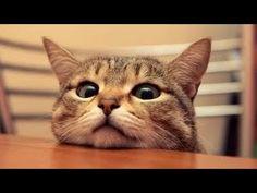 gatos - Buscar con Google