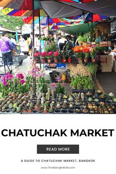 Chatuchak weekend market is the biggest and one of the most popular markets in Bangkok. It is our favourite market here in the big mango, which is why we are sharing this Chatuchak Market Guide!  #Bangkok #BangkokMarket #ThingsToDoInBangkok #BangkokThailand #BangkokTravel