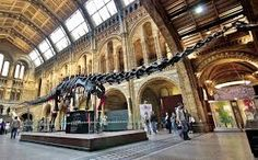 Museo de Historia Natural Santiago de Chile