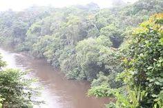 Výsledek obrázku pro jungle