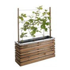 plus de 1000 id es propos de treillis sur pinterest plantes comestibles acacia et articles. Black Bedroom Furniture Sets. Home Design Ideas