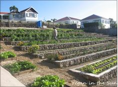 Schöner Garten in Saba in Booby Hill – Even if the topography of your backyard - myeasyidea sites