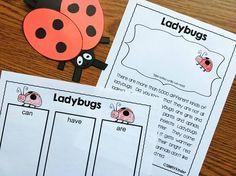 Lady bug reports  -