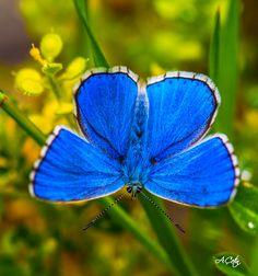 Allah'ın Yaratma Sanatı [YENİ] Yazan: Atakan ÇETİN  #Doğa #doğalgüzellik #Fotoğraf #Sanat #Yaratma http://goo.gl/Lsqd5b