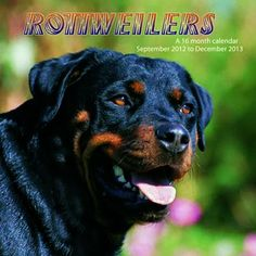 Rottweilers Wall Calendar: This 2013 wall calendar features a dozen images of beautiful Rottweilers. The perfect gift for anyone who loves these wonderful dogs!  http://www.calendars.com/Rottweilers/Rottweilers-2013-Wall-Calendar-/prod201300001869/?categoryId=cat10163=cat10163#