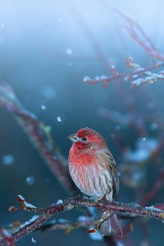 """10bullets: """" Little puzzled bird in first snowfall by Shibuya Sakura on Flickr. """""""
