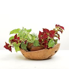 Dark and Dramatic Arrangement: Arrange coleus and bush ivy around the base of the interior container. Secure their stems into florist foam. Create movement by tucking in one or two longer branches to extend out of the display.