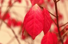 Red leafs by Martin Dugas on 500px