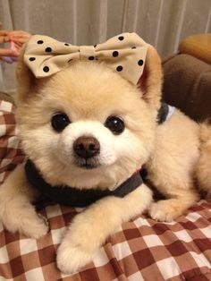 cute little puppy. ribbon adorable