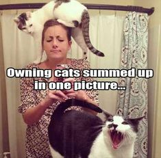 Crazy cat lady at home
