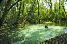 O Brasil é um país lindo, cheio de belezas naturais que fazem inveja nos gringos. Na hora de planejar sua viagem, por que não explorar seu próprio país? Mesmo os lugares mais conhecidos, como São P...