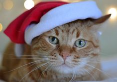 Cat Lovers Holiday Gift Guide 2019 - The Purrington Post Cat Lover Gifts, Cat Gifts, Cat Lovers, Pet Shop, Holiday Gift Guide, Holiday Gifts, Cat Fountain, Cat Icon, Cat Cages