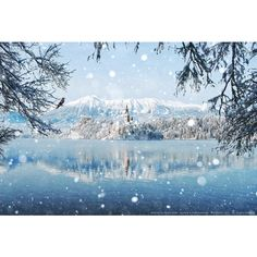 Winter Wonderland ❤ liked on Polyvore featuring backgrounds, pictures, winter, photos and snow