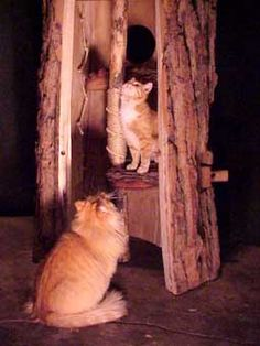 Make Cat Scratching Tree & Other Natural Tree Cat Furniture  #rrrcattreeplans