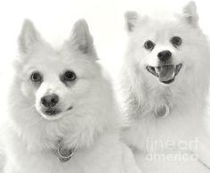 Pet Therapy Boys www.juliepalencia.com