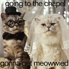 Hilarious wedding tumblrs to lighten the mood when bridezilla comes out!