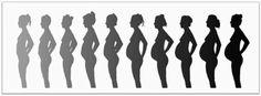 VebieAB: My Pregnancy Progress..