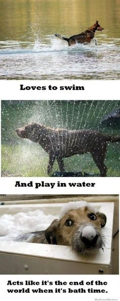 This is so Remmy! After the bath he runs around the yard happy as can be!
