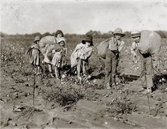 A family of children picking cotton near Waxahachie, 1913.