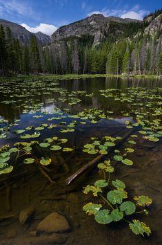 Nymph Lake, Rocky Mountain National Park, Colorado