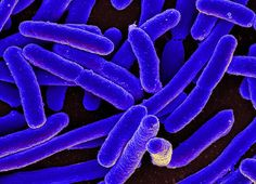 Industrial pollution from Indian pharmaceutical companies making medicines for nearly all the world's major drug companies is fueling the creation of deadly superbugs, suggests new research. Global health authorities have no regulations in place...