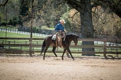 Peter Campbell, an extraordinary horseman. www.petercampbellhorsemanship.com