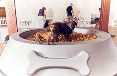 Primera exhibición de arte para perros y la consigna es casi idéntica a la de…