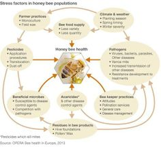 EU Announces Potential Ban on Neonicotinoid Pesticides Linked to Bee Deaths, Environmental Collapse - Stress factors in honey bee populations - Honey Bee Health Hives And Honey, Honey Bees, Bee Food, Stress Factors, Save The Bees, Bee Happy, Bees Knees, Bee Keeping, Queen Bees