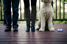 maternity photography. with dog. feet. baby booties.