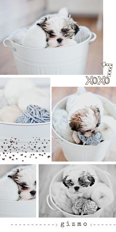 Adorable puppy photo session idea. {Dog} {Pet Photography}