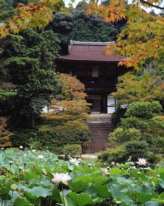 Nara Enjyou-ji temple , JAPAN