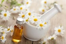 Chamomile: Not Just a Soothing Tea