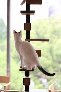 614 Best Cat Climbs Via Stairs Shelves Cubes Circles