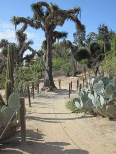 One of the sights along the hiking trail down into Florida Canyon, east of the Desert Garden.