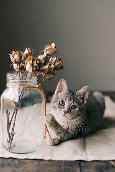 PEEK-A-BOO ORANGE TABBY CAT DOMINO PENDANT