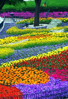 A flower garden is any garden where flowers are grown for decorative purposes. Because flowers bloom at varying times of the year, and some plants are annual, dying each winter, the design of flower gardens can take into consideration to maintain a sequen