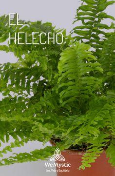 Helechos Magic Garden, Herb Garden, Vegetable Garden, Madison Square Garden, Landscape Design, Garden Design, Plantas Indoor, Lush, Small Backyard Landscaping