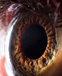 Close up of the human eye.