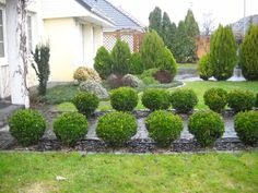 ogród przed realizacją 1