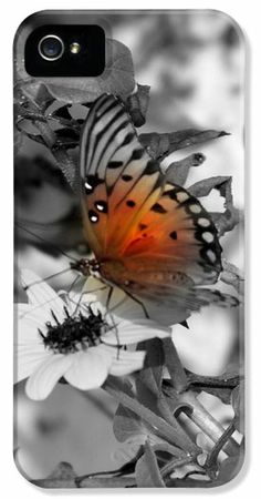 Monatch Butterfly kissed with color iPhone 5 Case / iPhone 5 Cover for Sale by Laurie Pike