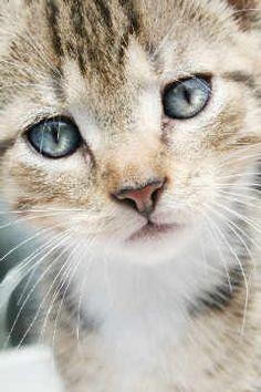 Schnurrhaare Katzenbaby von Künstler Stephanie Deissner (F1 Online) als gerahmtes Bild