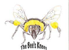 Illustration, Art Studio, Art, Ink, Bees Knees, Ink Illustrations